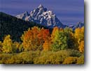 Stock photo. Caption: Snake River at Oxbow Bend and the Grand Teton Grand Teton National Park Rocky Mountains, Wyoming -- united states america snow peak aspens fall autumn color colors range parks aspen trees tree ranges peaks mountain majestic landscape landscapes strength tourist travel vacation destination destinations grandeur dramatic rockies crisp clean clarity jagged