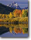 Stock photo. Caption: Aspens at Oxbow Bend Snake River and the Grand Teton Grand Teton National Park Rocky Mountains,  Wyoming -- united states america snow peak aspens fall autumn color colors range parks aspen ranges peaks mountains majestic landscape landscapes strength tourist travel destination destinations rockies crisp clean clarity jagged breathtaking idyllic vacation family