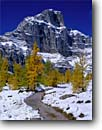 Stock photo. Caption: Subalpine larch and Eiffel Peak Larch Valley Trail above Moraine Lake Banff National Park,  Rocky Mountains Alberta,  Canada -- blue fall autumn color colors tree trees world heritage site sites parks mountain canadian rockies tourist travel high country destination destinations landscape landscapes larches snow backcountry conifer conifers deciduous Larix lyallii  trails hiking