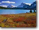 Stock photo. Caption: Bow Lake, Bow Peak and Mt. Hector Banff National Park Rocky Mountains Alberta,  Canada -- aqua blue glacial silt fall autumn  lakes world heritage site sites parks mountain canadian rockies landscape landscapes tourist travel holiday vacation destination destinations peak peaks blueberry blueberries icefields parkway lakeshore lakeshores