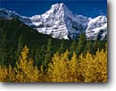 Stock photo. Caption: Black cottonwoods,  Waterfowl Lakes  and Howse Peak,  Icefields Parkway Banff National Park,  Rocky  Mountains Alberta, Canada -- fall autumn tree trees world heritage site sites parks mountain canadian rockies landscape landscapes tourist travel vacation holiday destination destinations peak peaks deciduous sites dramatic sunny spring scenic scenics majestic snow capped