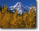Stock photo. Caption: Black cottonwoods,  Waterfowl Lakes   and Howse Peak,  Icefields Parkway Banff National Park,  Rocky Mountains Alberta,  Canada -- fall autumn tree trees world heritage site sites parks mountain canadian rockies landscape landscapes tourist travel vacation holiday destination destinations peak peaks deciduous sites