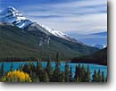 Stock photo. Caption: Black cottonwoods, Englemann spruce   & Waterfowl Lakes, Icefields Parkway Banff National Park,  Rocky Mountains Alberta,  Canada -- aqua blue glacial silt fall autumn tree trees lakes world heritage site sites parks mountain canadian rockies landscape landscapes tourist travel vacation holiday destination destinations powder attraction attractions peak peaks conifers evergreen