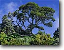 Stock photo. Caption: Cloud forest on the rim of   Irazu Volcano Irazu Volcano National Park Cartago Province,  Costa Rica -- tropical destination destinations tourist travel vacation sunny warm central american america eco tourism ecotourism tree trees parks forests latin skies
