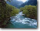 Stock photo. Caption: Hollyford River and native beech forest South Hollyford Road Fiordland National Park South Island, New Zealand -- summer travel tourist destination destinations attraction attractions  international world heritage site sites rivers tree trees creek creeks glacial runoff temperate rainforest rainforests rushing waters rapid rapids cascading parks virgin forest forests