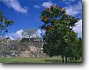 Stock photo. Caption: African tulip tree and Mayan ruins Kohunlich south of Foo Villa Quintana Roo Yucatan,  Mexico -- international exotic travel travels traveling Mexican south america ancient history historical tropical vacation vacations ruin temple classic period winter december national park persistance strength tourist building buildings stone archeological latin