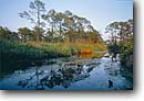 Stock photo. Caption: Slash pine forest Santa Rosa Island Gulf Islands National Seashore Florida -- united states america spring parks landscape landscapes majestic tourist travel destination destinations  scenic scenics soft forests islands wetland wetlands sunny riparian habitat seashores blue skies clear reflection reflections views view water