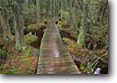 Stock photo. Caption: Atlantic White Cedar Swamp Trail Marconi Station Area Cape Cod National Seashore Massachusetts -- cedars swamps areas seashores trails boardwalk boardwalks fall autumn northeast northeastern united states america landscape landscapes marsh marshes wetland wetlands interpretive walks hiking foot path paths Chamaecyparis thyoides