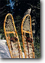 Stock photo. Caption: Gray jay & snowshoes, Daniels Lake Boundary Waters Canoe Area Superior National Forest Minnesota -- wildlife united states birds bird animal animals forest snowshoe snowshoes perched manmade sunny clear skies america american wild parks habitat jays grey curious curiosity accustomed acclimated accustomed people friendly used