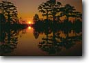 Stock photo. Caption: Bald cypress at sunset Combahee River ACE Basin Colleton County,  South Carolina -- peaceful united swamps trees deep south southern southestern states moody forest forests cypresses trunks trunk water habitat spring swamp swamps swampy wetland wetlands Taxodium distichum placid landscape landscapes sunsets reflection reflections