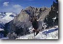Stock photo. Caption: Bull Rocky Mountain elk Yellowstone National Park Rocky Mountains Wyoming --  elks bulls winter snow parks wilderness tourist attraction united states america world heritage site sites struggle survival animal animals landscape landscapes habitat proud blue sky skies clear sunny