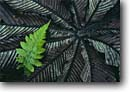 Stock photo. Caption: Fern and cecropia leaf Monteverde Cloud Forest Reserve North-Central Highlands Alajuela Province, Costa Rica -- Rainforest central america tropical rainforests  plants ecotourism cloudforest cloudforests forests  reserves detail details artistic nature design designs pattern patterns background backgrounds latin american shapes shape