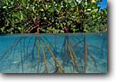 Stock photo. Caption: Red mangroves provide  shelter for growing fish Gau Island Fiji, Indo-Pacific --   mangrove sheltering nursery nursuries islands ocean oceans swamp swamps underwater split image images scenie scenic scenics clear clean clarity Rhizophora mangle ecology