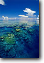 Stock photo. Caption: Coral reefs are   earth