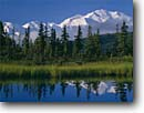 Stock photo. Caption: Mount McKinley  reflected in tundra pond   near Wonder Lake Denali National Park Alaskan Range,  Alaska -- united states america mountains ponds mountain alaskan ranges summer parks tundra landscape landscapes reflection reflections majestic tourist travel destination destinations symmetry symmetrical balance balanced tarn tarns peak peaks snow capped