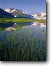 Stock photo. Caption: Rushes lines Divide Lake and Portage Glacier Chugach National Forest Alaska -- glaciers lakes subalpine alpine meadow meadows united states america reflection reflections summer sedge sedges mountain mountains landscape landscapes calm isolation calm tranquil