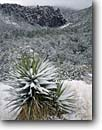 Stock photo. Caption: Mountain yucca and Organ Pipe Rocks Bonita Canyon Chiricahua National Monument Chiricahua Mountains, Arizona -- snow snowfall fresh welded tuft canyons monuments yuccas winter wintery landscape landscapes united states america southwest southwestern cold storm stormy