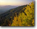 Stock photo. Caption: Aspens at sunrise,  Blue Vista Mogollon Rim Apache National Forest Arizona -- fall autumn leaves yellow tree trees forests united states america aspen views backroad backroads colors fresh travel vistas view distance landscape landscapes haze smog vast vastness