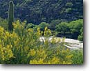 Stock photo. Caption: Palo verde and saguaro   along the Gila River   near Hayden Sonoran Desert,   Arizona -- canyons united states america river landscape landscapes desert deserts spring rivers verdes shrub shrubs riparian habitat habitats arid  wetlands wetland scenic scenics flowering cactus