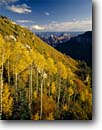 Stock photo. Caption: Aspens & bigtooth maples, Roaring Springs Canyon and San Francisco Peaks North Rim, Grand Canyon National Park Colorado Plateau, Arizona -- Keywords: united states america landscape landscapes sunny clear scenic scenics  scene fall autumn canyons country parks distance view views vista vistas aspen tree trees mountains plateaus maple color foliage world heritage site sites