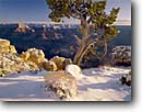 Stock photo. Caption: Utah juniper after winter storm Grand Canyon from Maricopa Point Grand Canyon National Park Colorado Plateau,  Arizona -- spectacular united states america world heritage site sites landscape landscapes tourist destination destinations attraction attractions travel breathtaking erosion time view vacation family snow pinon snowfall  red rock country fresh cold clearing storm