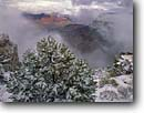 Stock photo. Caption: South Rim of Grand Canyon Two needle pinyon pine  on Maricopa Point Grand Canyon National Park Colorado Plateau,  Arizona -- canyons parks mood moody vista vast  dramatic united states america world heritage site sites landscape landscapes tourist destination destinations attraction attractions snow cold winter snowy travel clearing storm storms fresh wintery Pinus edulis