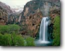 Stock photo. Caption: Fremont cottonwoods Havasu Falls, Havasu Canyon Havasupai Indian Reservation Colorado Plateau,  Arizona -- southwest southwestern united states america creek waterfall waterfalls red rock travertine limestone canyons reservations backcountry country dramatic plunge aqua pool pools wild secluded vista view spring snow snowfall snowfalls cold rare