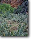 Stock photo. Caption: Pricklypear,  globemallow   and prince