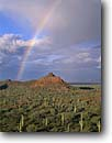 Stock photo. Caption: Rainbow and clearing storm Puerto Blanco Mountains Organ Pipe Cactus National Monument Sonoran Desert,  Arizona -- united states america landscape landscapes deserts rainbows clouds cloud saguaro cactus saguaros scenic scene scenes monuments arid weather  phenomenon storm