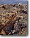 Stock photo. Caption: Petrified logs Long Logs Petrified Forest National Park Colorado Plateau,  Arizona -- painted desert deserts plateaus southwest southwestern united states america parks trunks fossil fossils fossilized landscape landscapes tourist destination destinations travel erosion eroded badlands log stumps geologic geology wood