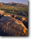 Stock photo. Caption: Petroglyphs on Signal Hill & saguaros  Tucson Mountain Unit Saguaro National Park Sonoran Desert,  Arizona -- parks deserts petroglyph rock art southwest southwestern ancient rocks boulders boulder mountains saguaros cactus march united states america dry ancient civilization civilizations warm native american communication anasazi culture cultures