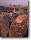 Stock photo. Caption: Petroglyphs on Signal Hill Tucson Mountain District Saguaro National Park Sonoran Desert,  Arizona -- parks deserts petroglyph rock art southwest ancient rocks boulders boulder spring evening mountains saguaro cactus march united states america ancient civilization civilizations warm native american communication anasazi deserts