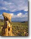 Stock photo. Caption: Eroded granite and saguaros Tucson Mountain Unit Saguaro National Park Sonoran Desert, Arizona -- light parks united states southwest southwestern country clouds united states america landscape landscapes tourist travel destination destinations saguaros cactuses deserts face faces profile profiles Carnegiea gigantea