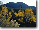 Stock photo. Caption: Apache plume and aspens Sunset Crater Sunset Crater Volcano National Monument Colorado Plateau,  Arizona -- mountains united states america scenic scenics landscapes landscape craters dramatic volcanic craters extinct volcanoes aspen fall color autumn cone cones monuments
