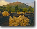 Stock photo. Caption: Ponderosa pines Sunset Crater Sunset Crater Volcano National Monument Colorado Plateau,  Arizona -- summer mountains united states america scenic scenics landscapes landscape forests craters volcanic craters extinct volcanoes cinder cones cone volcano monuments