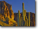 Stock photo. Caption: Saguaro and The Flatiron Siphon Draw, Superstition Mountains Tonto National Forest Sonoran Desert,  Arizona -- Carnegiea gigantea Cereus giganteus saguaros cactuses deserts mountain mountains landscape landscapes spring united states america southwest southwestern grand time tough environment habitat desolation arm arms contrast