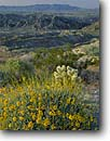Stock photo. Caption: Brittlebush, Carrizo Badlands   and the Vallecito Mountains Anza-Borrego Desert State Park San Diego County, California -- deserts parks Southern spring march morning wildflowers wildflower flower deserts flowers encelia farinosa  united states america arid landscape landscpes sunny clear blue skies stark harsh environment