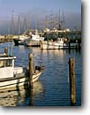 Stock photo. Caption: Hyde Street Pier Fishermans Wharf San Francisco Bay California -- travel marinas harbor harbors harbour harbours ship ships morning light tourist destination destinations united states america pacific attraction attractions urban wharfs commercial fishing boat boats vessels vacation landmark landmarks piers sunny