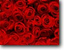 Stock photo. Caption: Red roses San Francisco California --   background backgrounds bouquet detail flower flowers domestic romance love gift present rose valentine romantic