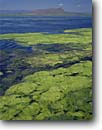 Stock photo. Caption: Algae bloom in summer Tule Lake National Wildlife Refuge Modoc County High Desert, California -- blooms united states america refuges system northern lake wetlands lakes waterfowl habitat duck goose geese habitats