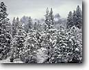 Stock photo. Caption: Ponderosa pines and Castle Crags Castle Crags State Park Trinity Mountains California -- winter snow snowfall parks tree trees fresh mountain cold freeze freezing storm stormy