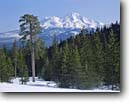 Stock photo. Caption: Mt. Shasta from Castle Lake Nordic Ski Area Shasta National Forest Cascade Range,  California -- united states america landscape landscapes snowy snow winter travel destination destinations outdoor recreation skiing cross country area mount cascades
