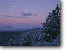 Stock photo. Caption: Winter moon and ponderosa pines Mount Shasta Shasta National Forest Cascade Range,  California -- forests volcano volcanoes volcanos united states mountains winter moons snow snowfall dusk moonrise moonrises sunset peak sunsets cold america landscape landscapes cone cones skies snow cap capped dormant inactive dusk wintery fresh