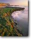 Stock photo. Caption: Arch at Four Mile Beach Wilder Ranch State Park Santa Cruz County California -- headland surf wave waves pacific ocean oceans coast coastline coastlines seascape seascapes united states america winter shore shoreline shorelines arches algae seaweed seaweeds minus tide tides sandstone coastal