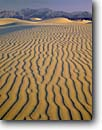 Stock photo. Caption: Mesquite Flat Dunes    and Grapevine Mountains Death Valley National Park Mojave Desert,  California -- deserts parks winter parabolic wind erosion landmark landmarks named attractions tourist travel destination destinations soft sandy clean patterns pattern desert freedom smooth pristine eternal dune loneliness curves patterns landscape landscapes