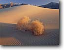 Stock photo. Caption: Kelso Dunes and Granite Mountains Mojave National Preserve Mojave Desert San Bernardino County,  California -- deserts southwest southwest southwestern arid mohave united states america landscape landscapes dune sand ripple ripples parabolic sandy alone isolation winter scenics scenic preserves sunny clear blue skies poise smooth clean velvety mountain rippled