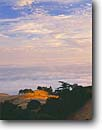 Stock photo. Caption: Coastal fog Bolinas Ridge Mount Tamalpais State Park Marin County,  California -- united states america landscape landscapes coast coasts west pacific parks  rolling hills oaks foggy clouds clouds summer weather san francisco bay area