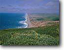 Stock photo. Caption: Yellow bush lupines   on Pt. Reyes and Point Reyes Beach Point Reyes National Seashore Marin County,  California -- united states america landscape landscapes coast coasts west pacific coastline coastlines beach beaches vista view vista views parks san francisco seashores lupine wildflower wildflowers flowers flower sandy sunny blue skies blue ocean seascape seascapes