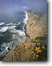Stock photo. Caption: Wildcat Beach Point Reyes National Seashore Marin County California -- united states america landscape landscapes coast coasts west pacific coastline coastlines shoreline shore shorelines summer waves surf rocky headlands headland rock cliffs areas foggy rugged bluffs seascape seascapes wave ocean oceans crashing succulent