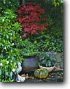 Stock photo. Caption: Garden detail Fern Canyon Gardens Mill Valley Marin County,  California -- united states america west pacific  formal garden design designs private rhododendron maple planting azalea pumpkin